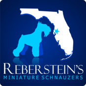 Miniature Schnauzers And Miniature Schnauzer Breeder