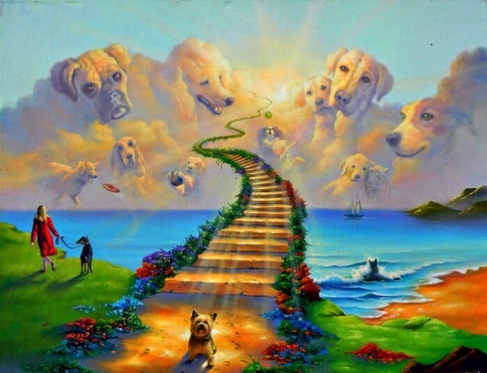 Animals Go To Heaven, The Rainbow Bridge