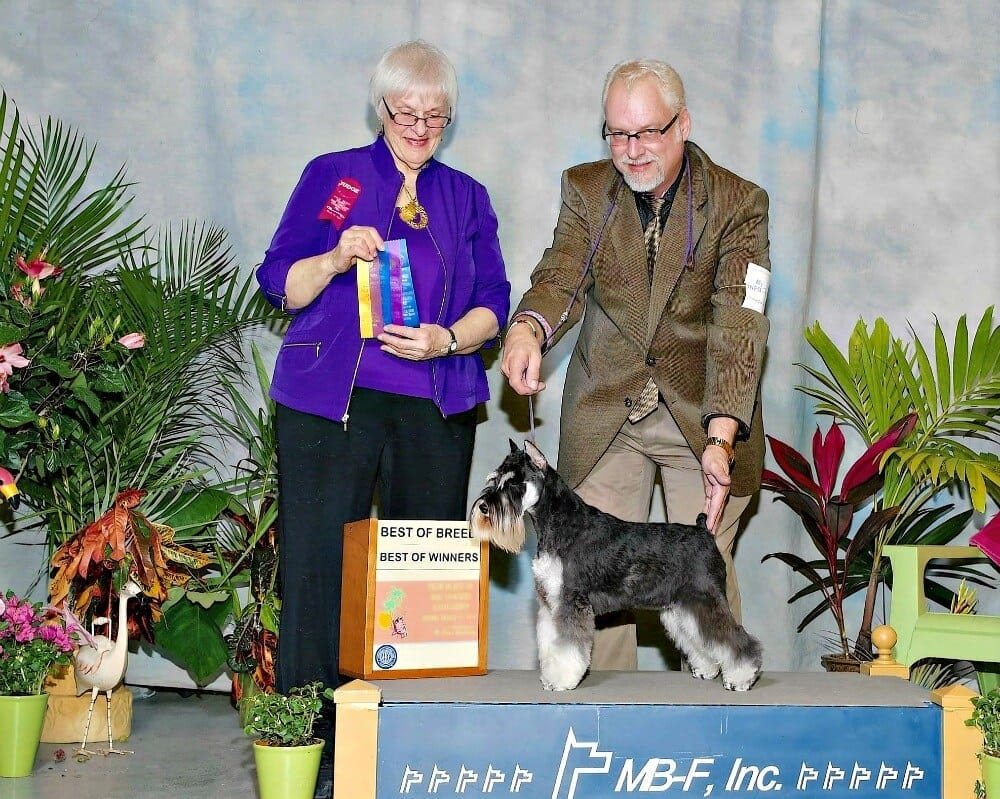 AKC Dog Shows (Skylar)