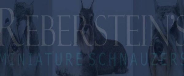 Reberstein's Miniature Schnauzers On Facebook