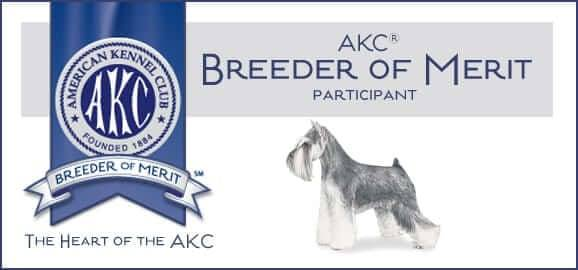 Reberstein's Miniature Schnauzers AKC Breeder Of Merit